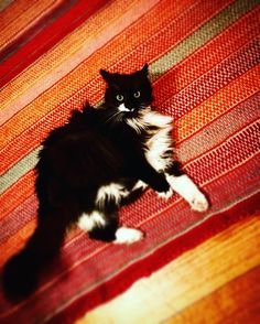 Socks #cat on a rug #home