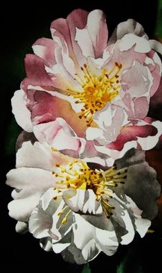 Pink & White Roses, original painting by artist Jacqueline Gnott | DailyPainters.com
