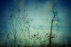 Fleeting Moment - Blue Shades by Olivia Joy StClaire