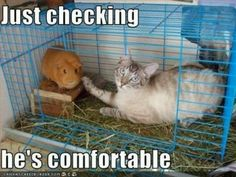 In high school my cat would have loved to get to my rodents haha