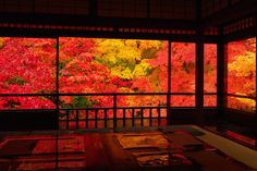 Kyoto, Japan 瑠璃光院  #AutumnLeaves #紅葉