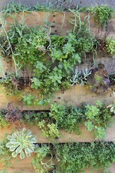 Wood Pallett verticle garden