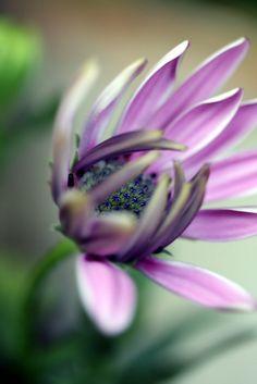 purple  #plant #awersome #flower #nature #tree #garden #wonderful #sexy flowers #carde #magic #color #500px #dream  #putdownyourphone #plants