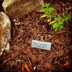 THINK BLUE: Added mini boulders and plant signs to my garden. by joaomarimba
