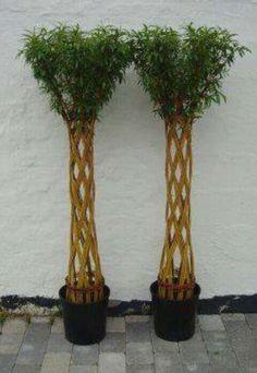 Flet til haven Backyard Plants, Garden Plants, Living Willow, Garden Solutions, Willow Weaving, Potager Garden, Paper Weaving, Garden Club, Topiary