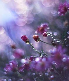 Purple Flowers. Nature Photography.