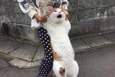 Yahoo!検索(画像)で「猫 脱走」を検索すれば、欲しい答えがきっと見つかります。