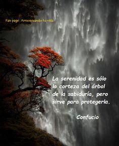 La serenidad es sólo la corteza del árbol de la sabiduría, pero sirve para protegerla. Confucio