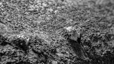 ALLPE Medio Ambiente Blog Medioambiente.org : Ver siete veces el nacimiento de una seta