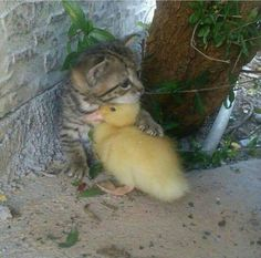 Kitty and ducky http://ift.tt/2ryTAz6