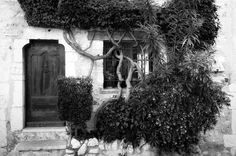 © Florian C.A. Czech    V E R W A C H S E N . . . Painting, Outdoor, Art, Windows, Architecture, Nature, Outdoors, Art Background, Painting Art