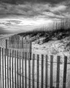 black and white beach sand fence sea oats by photographybyVena, $30.00