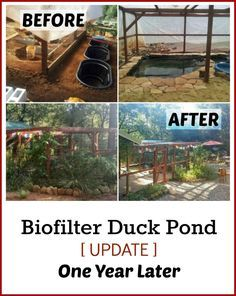 Check out the photos from the Permaculture Biofilter Duck Pond a Whole Year…