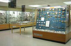 Richard H. Schmidt Museum of Natural History at Emporia State University