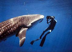 Big dream: hope to dive with whalesharks in the Seychelles. Small chance in August, but still! ;-)