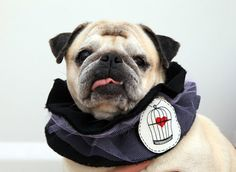 dog clothing scarf for pug with illustrated by treeillustration