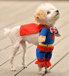 Cute Pet Costumes