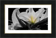 Lilies Kissed With Green Framed Print By Laurie Pike