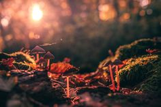 So warm by HatCat Photography - Photo 180572605 / 500px