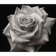 Black and white rose #art #drawing #sketch #pencil