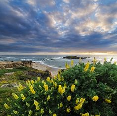 Springtime in Pescadero - San Mateo Coast, California, by Jim Patterson
