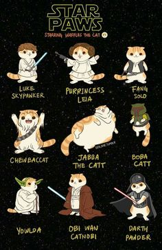 Star Paws!!! Hahaha!!!!! - May the 4th be with you!