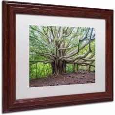 Trademark Fine Art Banyan Canvas Art by Pierre Leclerc, White Matte/Wood Frame, Size: 16 x 20, Multicolor