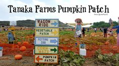 Tanaka Farms Pumpkin Patch in Irvine, CA