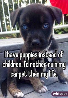 """""""I have puppies instead of children. I'd rather ruin my carpet than my life."""""""