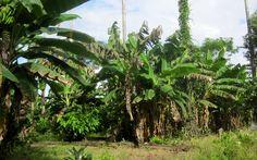 Jungle Peru - Puerto Maldonado
