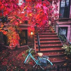 Nothing better. . Autumn, Brooklyn, NYC (at New York, New York)