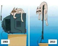 non sempre la tecnologia aumenta il benessere della propria vita Cat bed