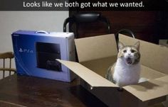 I want what chu have ;; a cute cat in a box and a ps4 - @nureesha