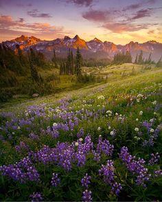Mount Rainier National Park, Washington   Foto di @lijahhanley