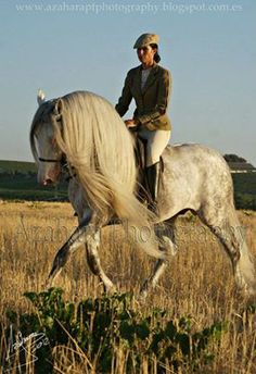 Andalusian Horse-such an elegant breed