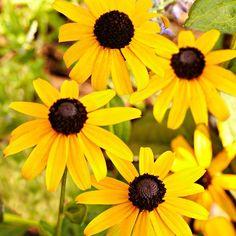 10 Easy Perennials A