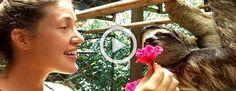 Ella ofrece a este perezoso una flor Y le responde de la mejor (y más lenta) forma #viral