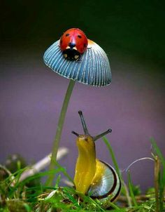 Ladybug (Ladybird) on toadstool or mushroom & Snail Beautiful Creatures, Animals Beautiful, Cute Animals, Beautiful Bugs, Amazing Nature, Bugs And Insects, Jolie Photo, Nature Animals, Animals Sea