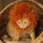 Cat Mane - via @Craftsy If there was any chance I could get this on my cat, I would totally knit this.