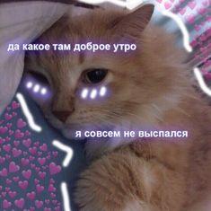 Hello Memes, Cute Love Memes, Cute Texts, Animal Memes, Cat Memes, Kawaii, Humor, Funny, Pictures