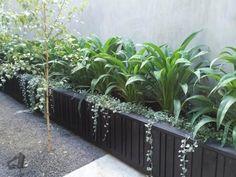 Lush Arthoropodium cirratum and Dichondra 'Silver Falls' bring life to this inner city courtyard.