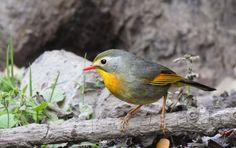 My Birding Trails...: Wordless wednesday...