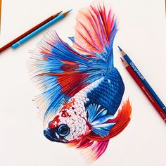 Colored pencil nature, wildlife, animal and bird art Fish Drawings, Colorful Drawings, Animal Drawings, Pencil Drawings, Betta Fish Tattoo, Sharpie Colors, Feather Drawing, Underwater Art, Caran D'ache