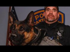 Please Pay Your Respects To Jethro The K9 Officer - I Heart Pets