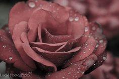 Lucid Photography via Flickr, Ryan Johnson