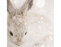 25% OFF Snow Bunny - Nature Photography, Cute Nursery Art, Animal Print, Winter, Rabbit, White, Beige, Neutral Decor, Minimal