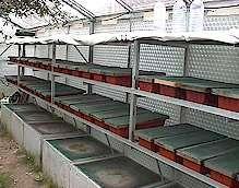snail breeding system