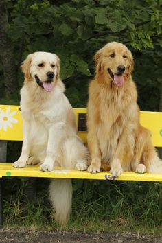 Benched with Finn and Teddy