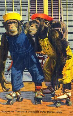 MI Michigan Detroit Dressed Chimpanzee Theatre in Zoological Park Linen Postcard Zoo Animals, Funny Animals, Detroit Zoo, Detroit Michigan, Monkey See Monkey Do, Monkey Business, Chimpanzee, Roller Skating, Vintage Postcards