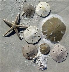 Sand dollars and starfish from the SC beaches where we went once or twice every summer when we were growing up.I can smell them from here.